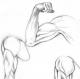 anatomic01